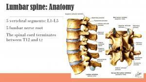 Low back anatomy